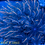 Thumbnail: Rainbow Clove Polyps