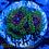 Thumbnail: Hallucination Zoa
