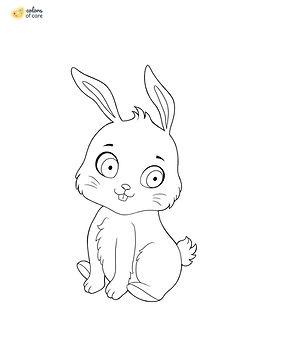 Bunny_2 2.jpg