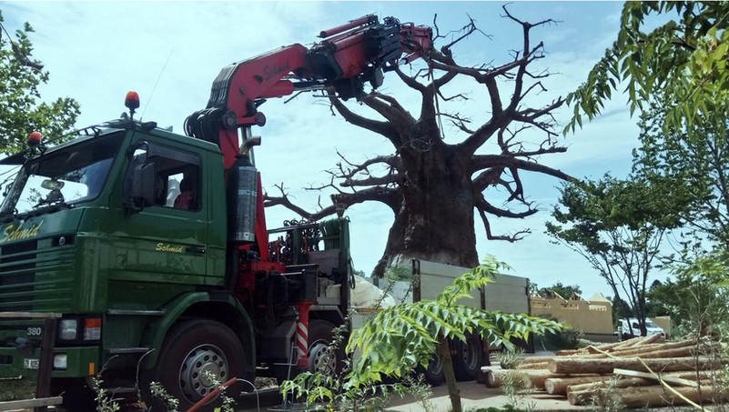 Kranarbeit: Baum transportieren