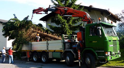 Bäume abholen und entsorgen