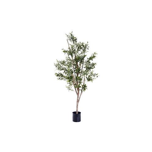 Olive Tree, 150cm