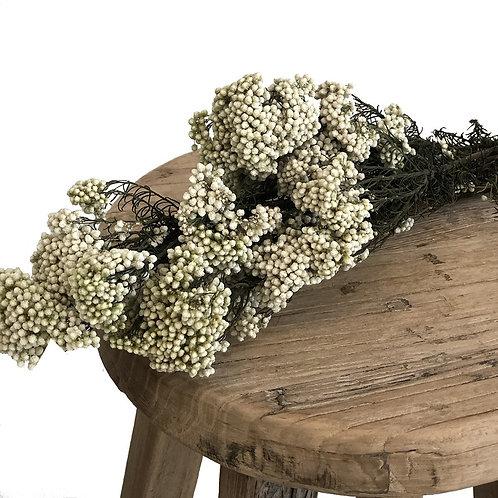 Rice Flower - Preserved