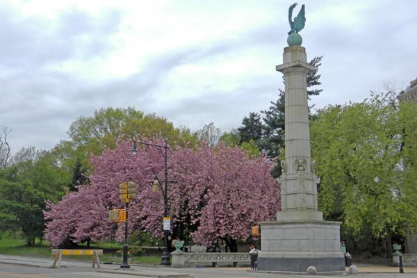 Grand Army Plaza Cherry Blossom