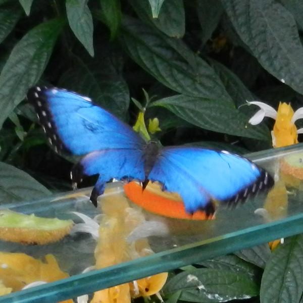Papillons en liberté, 2018