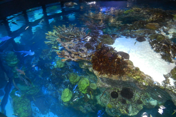 Bassin de corail