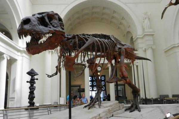 Le Field Museum et le squelette de Sue