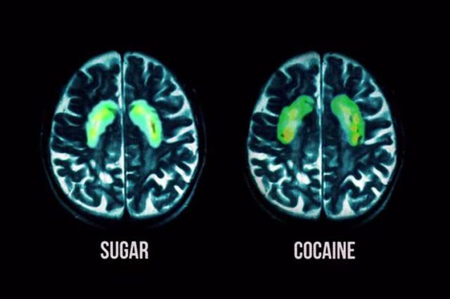 sugar vs cocaine