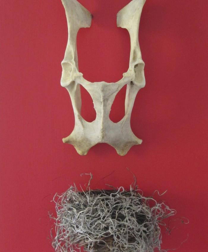 Allison_Kotzig,_Pelvic_bone,_nest_on_boa