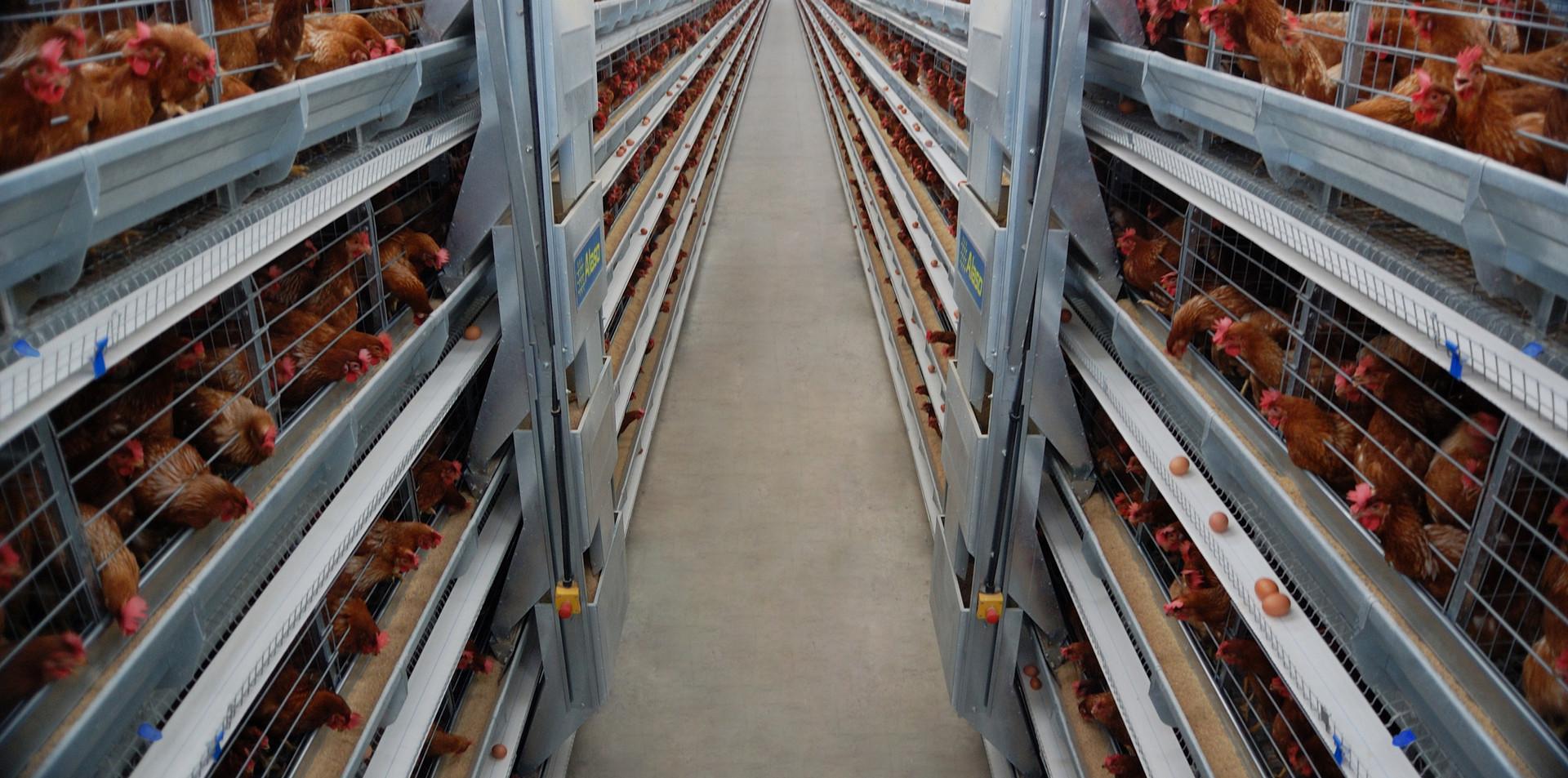 Alaso Traveling Hopper Feeding System set up for Stacked System