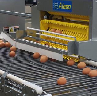 Alaso Egg Collector Elevator