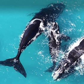 whales2.jpg