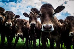 Beef #2