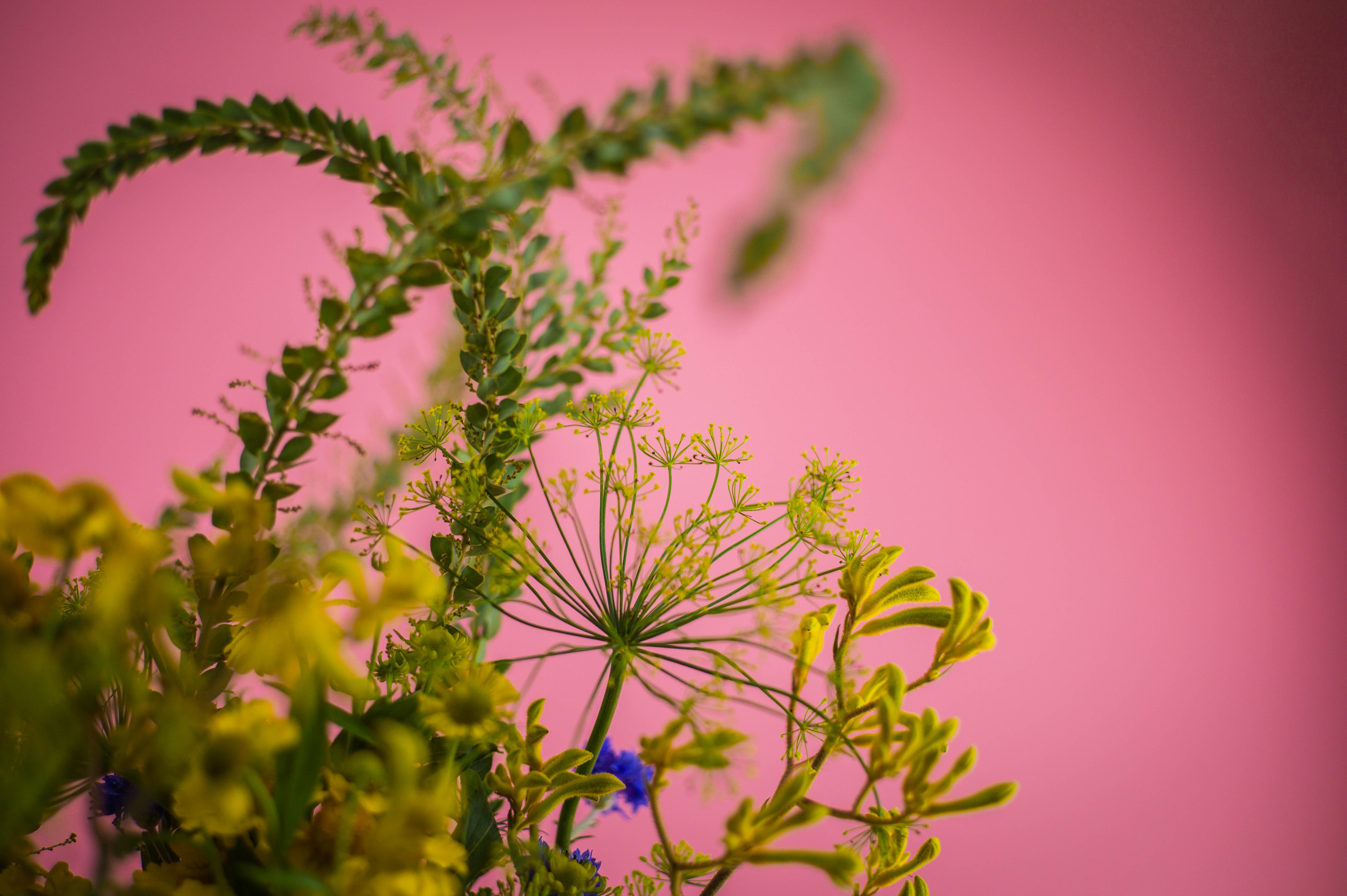 Flowers #9