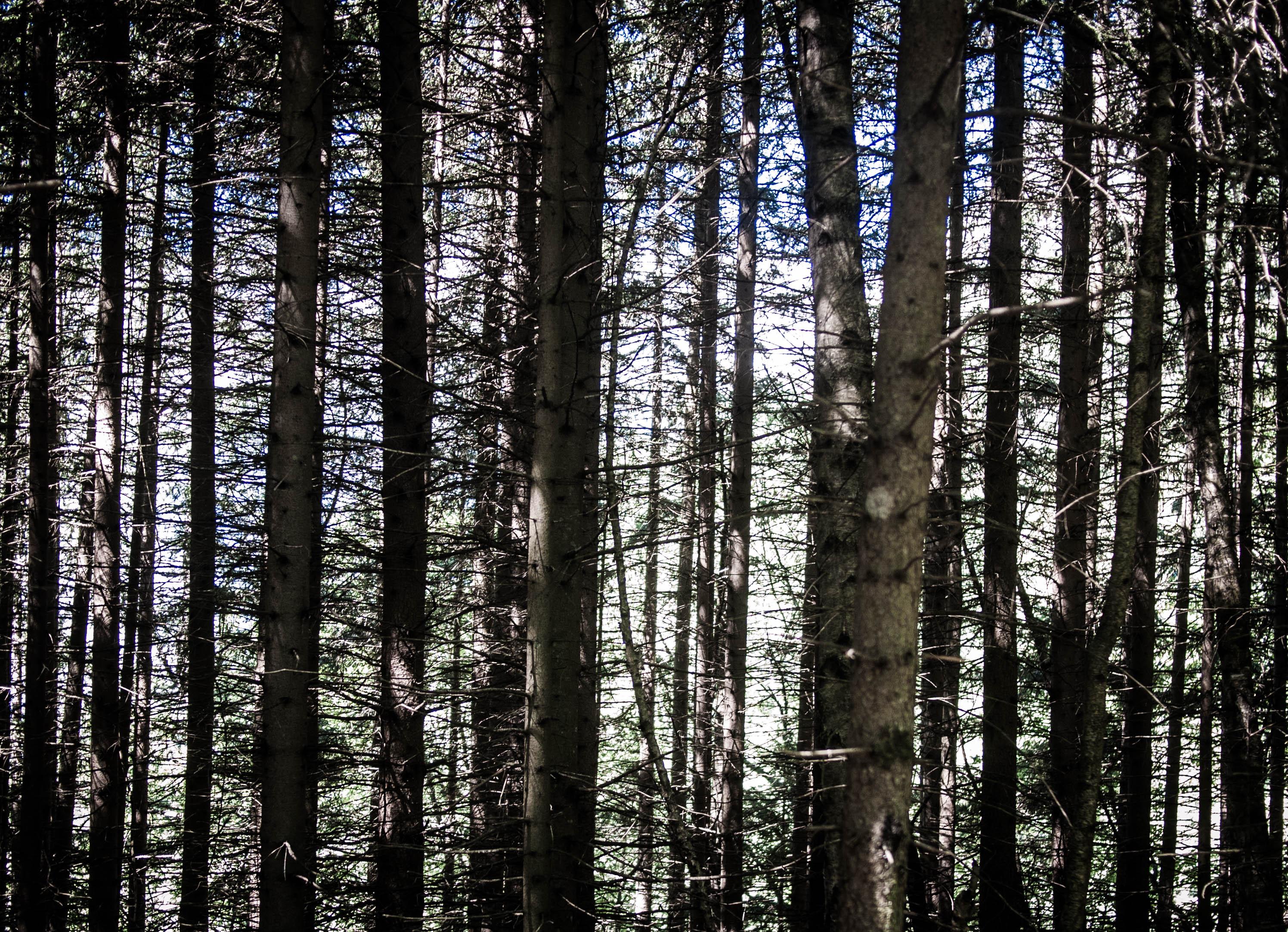 Wood #4