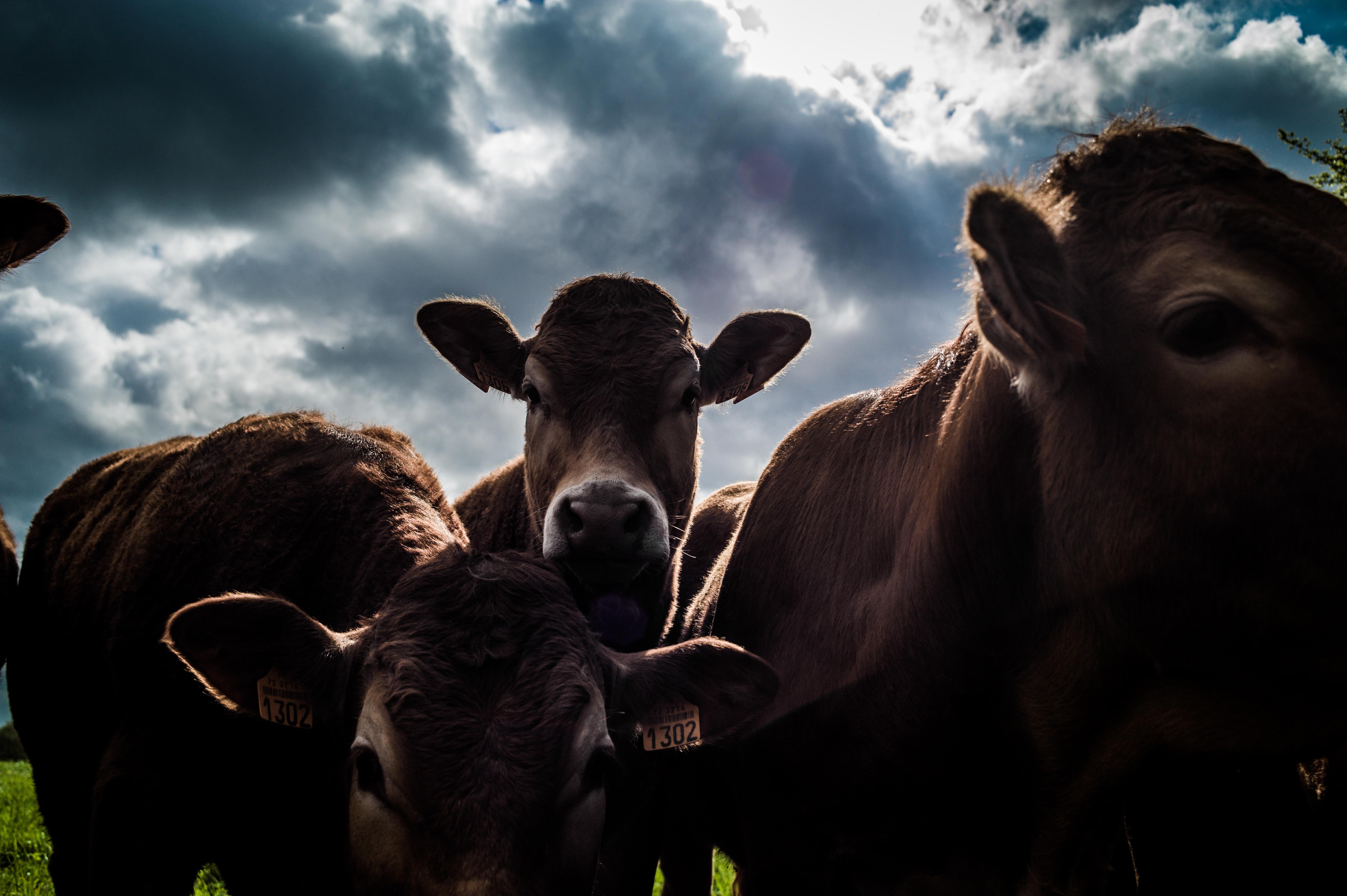 Beef #3