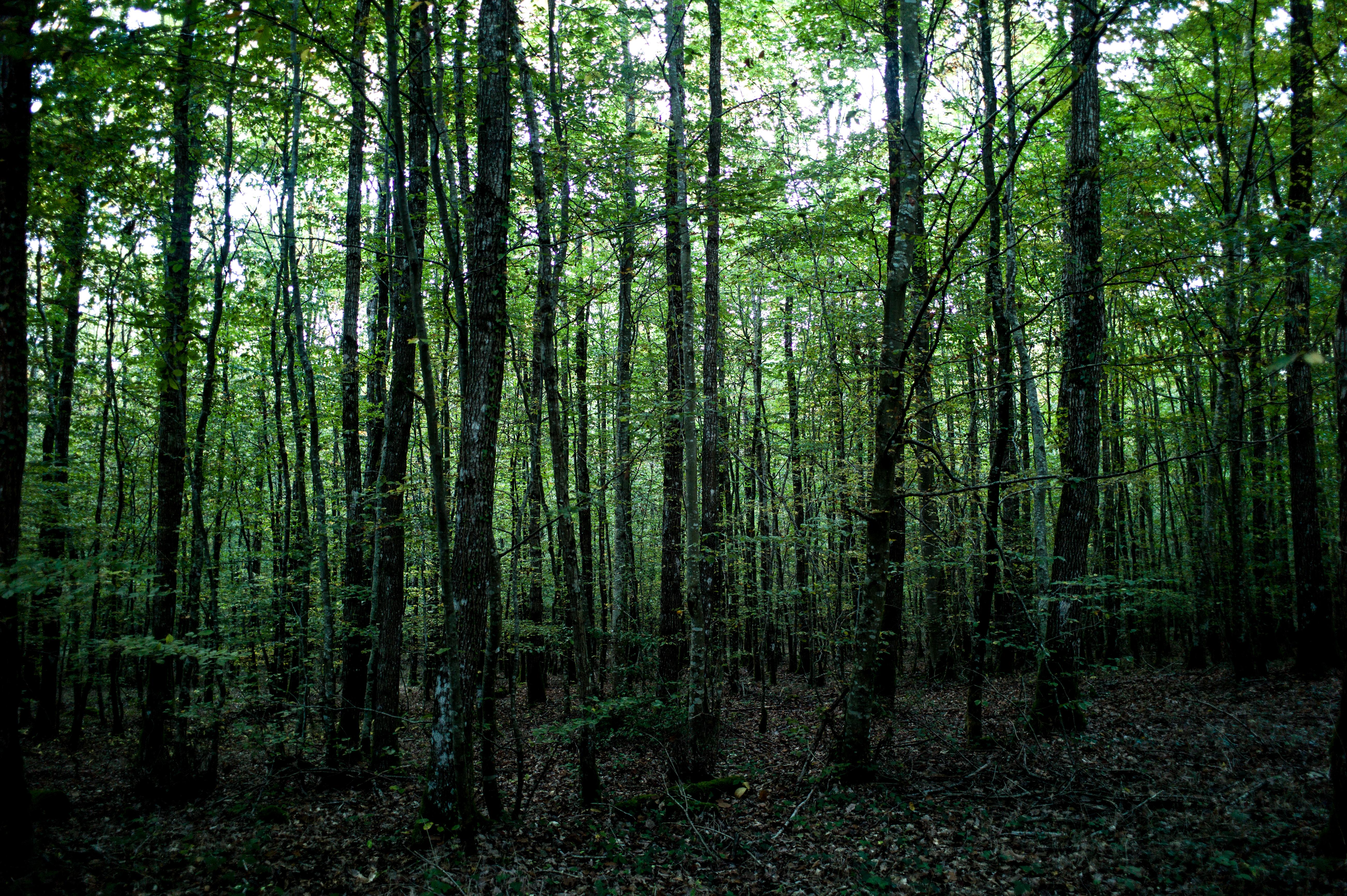 Wood #3