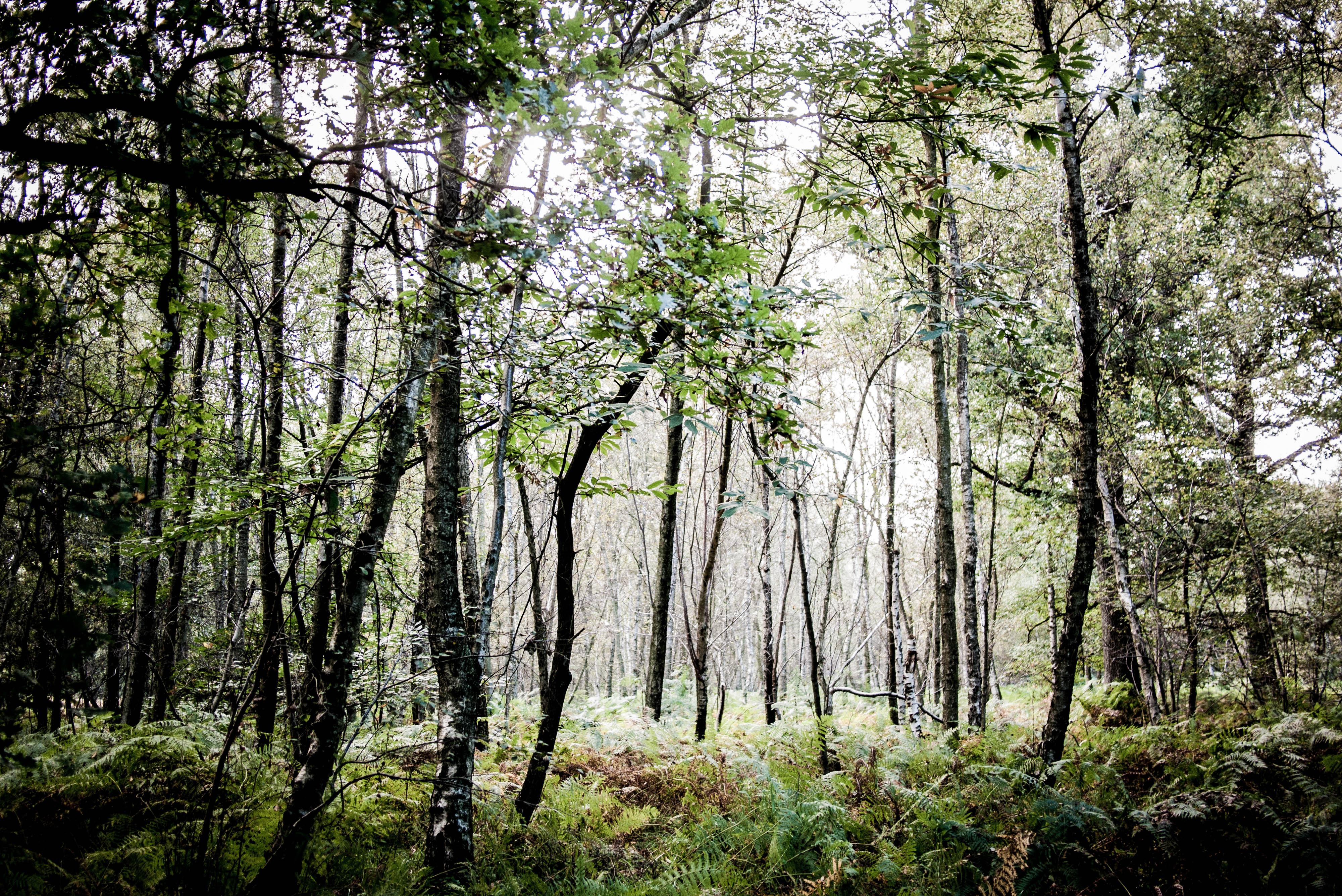 Wood #11
