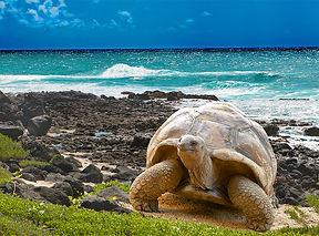 Islas Galapagos (8).jpg