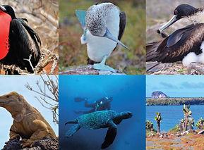 Islas Galapagos (7).jpg