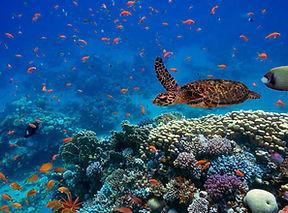 Islas Galapagos (6).jpg