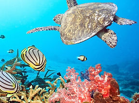 Islas Galapagos (5).jpg