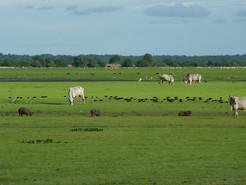 Llanos Orientales.jpg