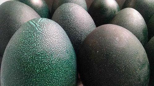 Hollow Emu Egg
