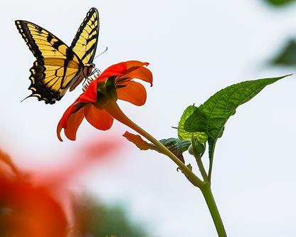 Vernon Gardens Butterfly 2.jpg