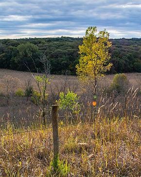 Loess Yellow Tree.jpg