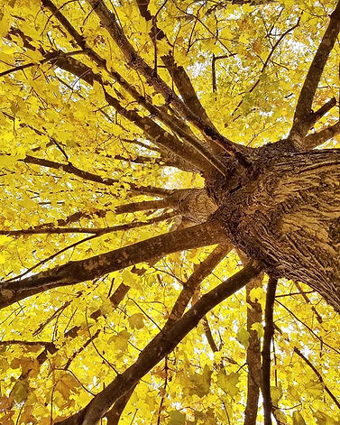 _How beautifully leaves grow old. How fu