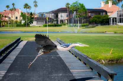 BirdFlying.jpg