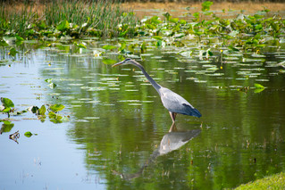 bird hunting4.jpg
