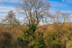Hythe Canal & Wildlife