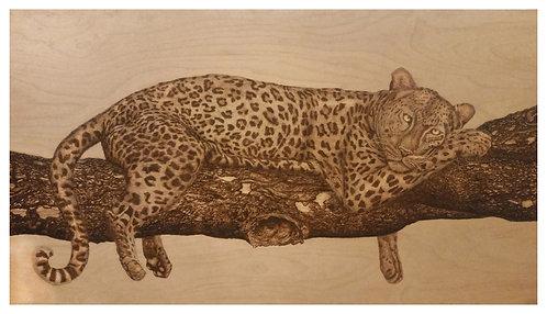Lazy Sunday - Leopard
