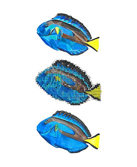 Blue Tang | Triptych Series