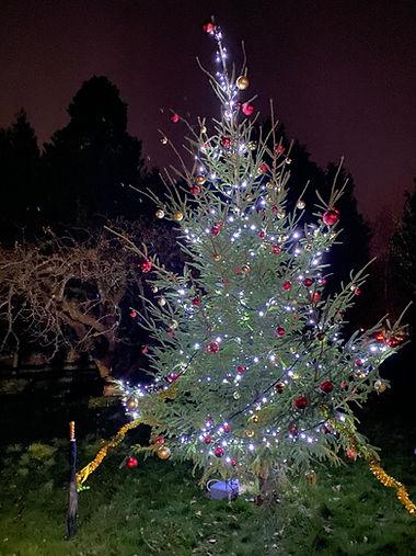 CH Xmas tree 2020.jpg