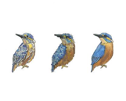Kingfisher | Triptych Series