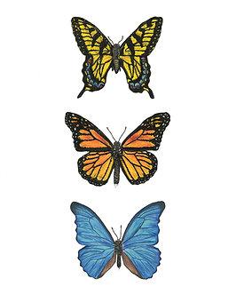 Butterflies | Triptych Series