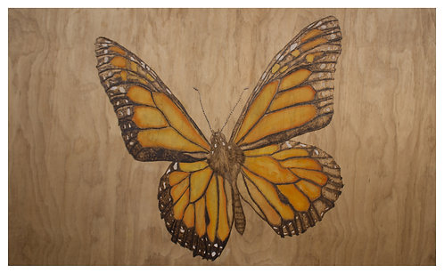 Transparency - Monarch Butterfly