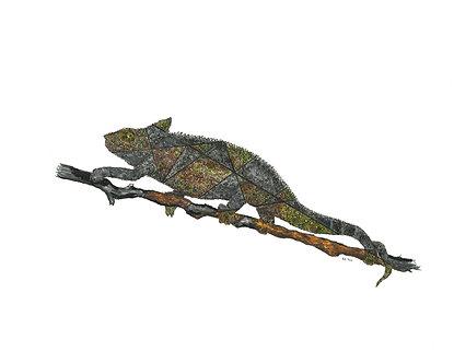 """Chameleon - """"Blending In"""""""