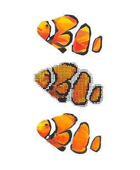 Clownfish | Triptych Series