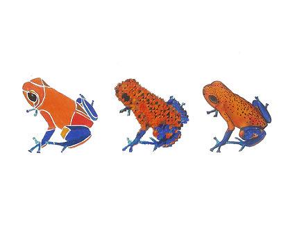 Poison Dart Frogs | Triptych Series