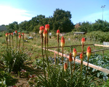 Sugden Road Allotments
