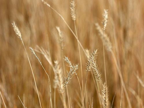 "Badlands to Grasslands 2 (8""x10"" photograph)"