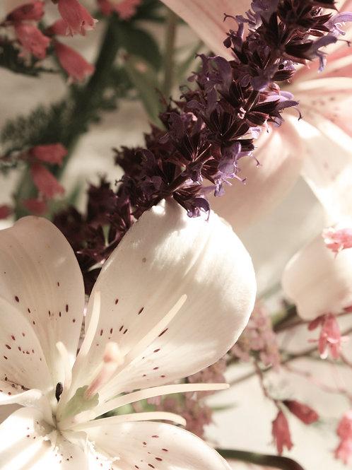 "Flower Study 12 (8""x10"" photograph)"