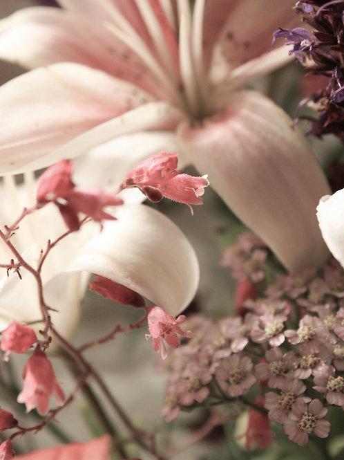 "Flower Study 09 (8""x10"" photograph)"