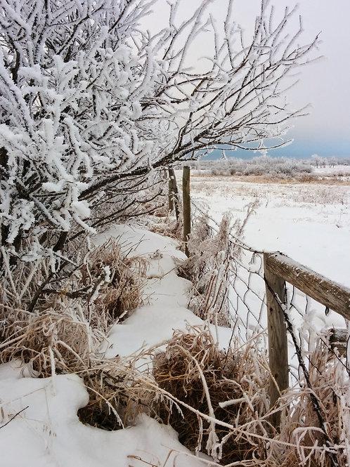 "Frosty Farm 2 (8""x10"" photograph)"