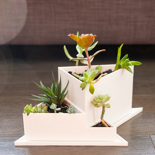 Biodegradable 3D Printed Planter - Ray