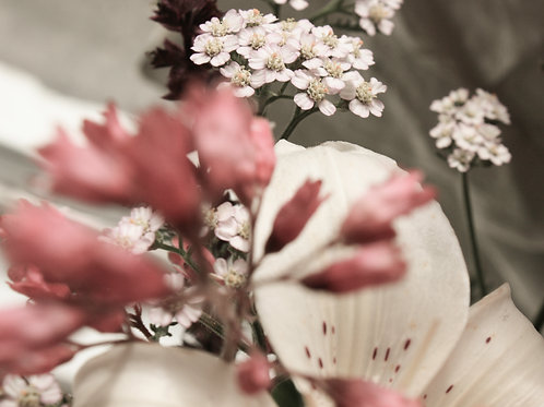 "Flower Study 01 (8""x10"" photograph)"